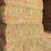 150mt of Canola Hay For Sale in 8x4x3's - Pro: 15.5 / ME: 8.5