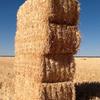 400/mt of Organic certified Oat Straw