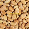 Beans ( Faba-Fiesta ) Wanted 40 m/t of Each.