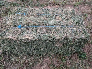 Lucerne Hay Small Squares