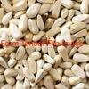 15mt Safflower Seed For Sale