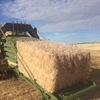 Barley and Wheat Straw