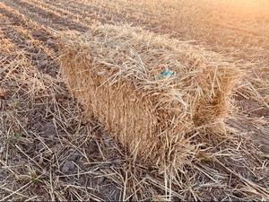 Wheaten Staw small squares