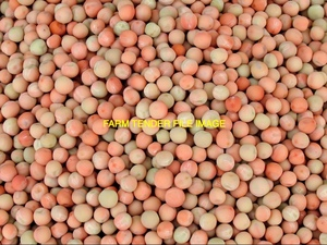 Feed Morgan Field Peas For Sale x 100 m/t