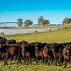 Tenterden Station, Gyra, NSW makes $17 million at Auction