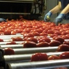 This could be yours - Tomato Farm and processing facility at Jerilderie