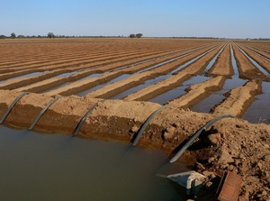 Murray Darling Basin-wide Compliance Review Announced