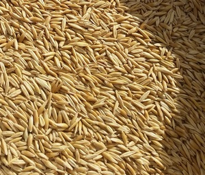 Oat seed (Hay) 5 ton roughly