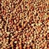Field Peas ( Twilight ) x 130 m/t Approx