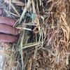 100 m/t Wheaten Hay 8x4x3 Bales