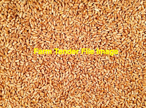 Feed Red Wheat For Sale Ex Farm