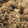 Small Square Bales Oaten Straw For Sale Ex or Del