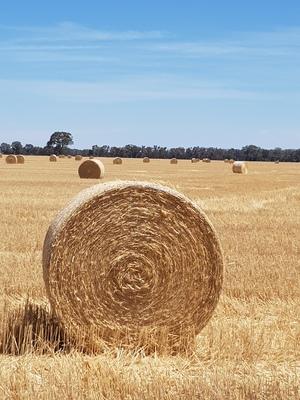 Wheaten Straw Rolls
