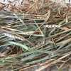 Wheaten Hay ( Awnless ) 8x4x3 - 300 xx 550 KG Approx Bales