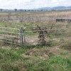 Portable Sheep Yards