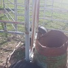 Portable Twin  Milking Head Bail