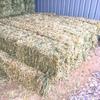 Barley Hay small Square Bales HORSE GRADE