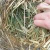Wheaten hay in rolls