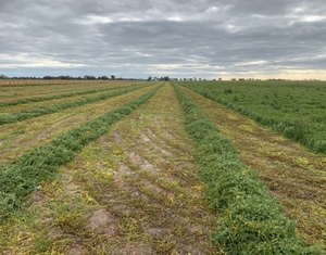 Wanted Vetch and Cereal Hay Standing around Birchip area