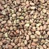 Beans ( Fiesta ) x 300 m/t
