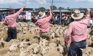 Ballarat today - Lambs dearer, Sheep slightly easier - 19/12/17