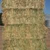 New Season Oaten Hay for Sale in 8x4x3's