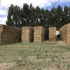 Hay for sale 250 big squares