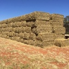 600m/t Barley Vetch Pea Hay 550kg Ave 8x4x3 Bales
