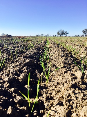 Contract sowing