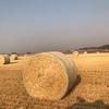 Barley Straw 5x4 Rolls