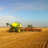 Domestic wheat cash markets firm