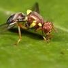 RapidAIM takes aim a the pest of all pests