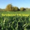 SSS (Super Sweet Sudan Grass) Under Centre Pivot Irrigator for Fine  Chop.  Approx 350 mt