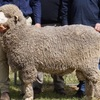 Sohnic, Old Ashrose and Yonga Downs Ram sale results