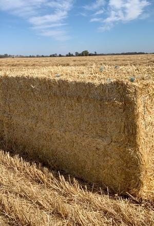200mt Barley Straw 8x4x3 Bales
