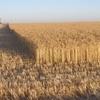 SA Grain Farmers had a tough 17/18 year according to Bank SA