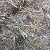 Barley Hay For Sale in 8x4x3's
