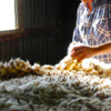 Wool price down