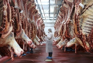 Australian Beef production sinks