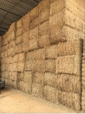 Clover Hay 8x4x3 - 127 x 650 KG Approx Bales & Shedded