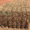 Vetch Hay 8x4x3 - 200 m/t x 600 KG Bales Approx