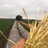 Good Barley Straw For Sale In Rolls - The best in Victoria !!