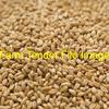 40 Tonne - ASW Wheat - Ex Farm - New Season