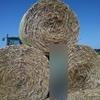Phalaris Rye 5x4 rolls
