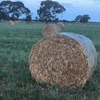 5x4 Rolls of Vetch & Oaten Hay (90% vetch)
