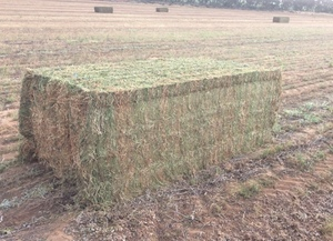 200mt Vetch Hay 8x4x3 ##Shedded##
