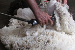 Wool market sheds some gains