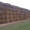 BARGAIN .$118  TERMS AVAILABLE, VETCH HAY per TON  381 BALES