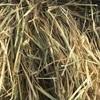 Wheaten Hay Rolls For Sale