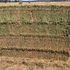 N/Season Vetch Hay For Sale in 8x4x3's 670Kgs - Shedded